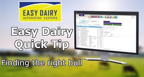 Easy Dairy Quick Tips - Finding the right bull